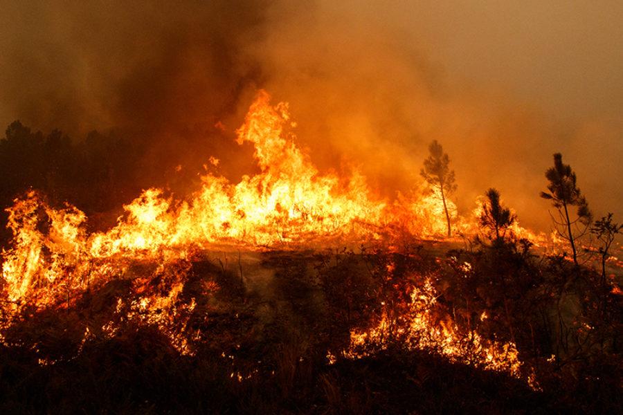 Incendios devoran un millón de hectáreas de bosques
