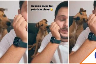 #Viral: Perro se hace viral al entender palabras clave