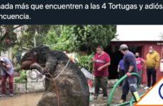 #Viral: los mejores memes de la rata gigante en la CDMX