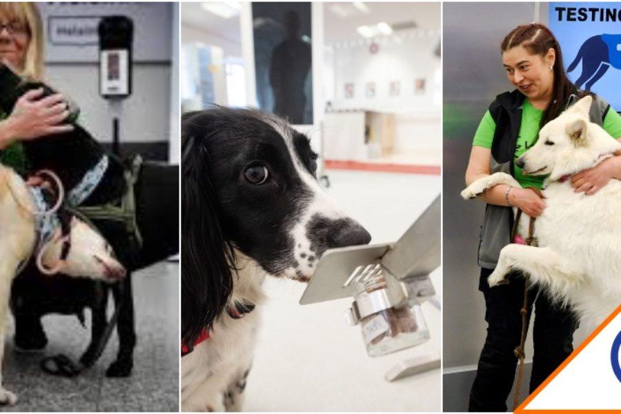 #Viral: En Finlandia utilizan perros en aeropuertos para detectar el Covid