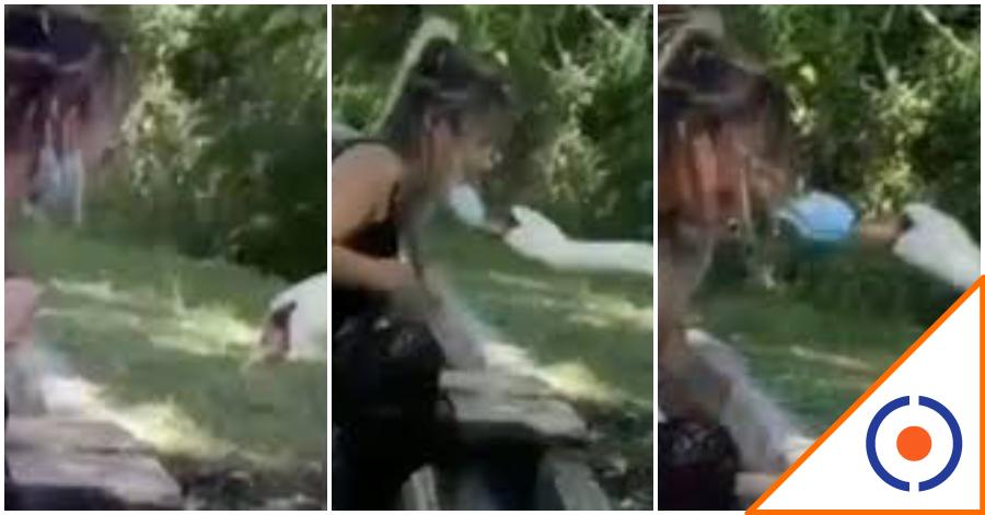 #Viral: Cisne se hace famoso por ponerle cubrebocas a una mujer