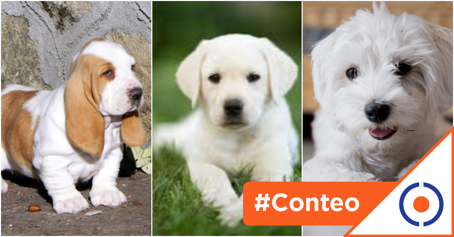 #Viral: 5 lugares para adoptar un perro… ¡No compres un amigo!