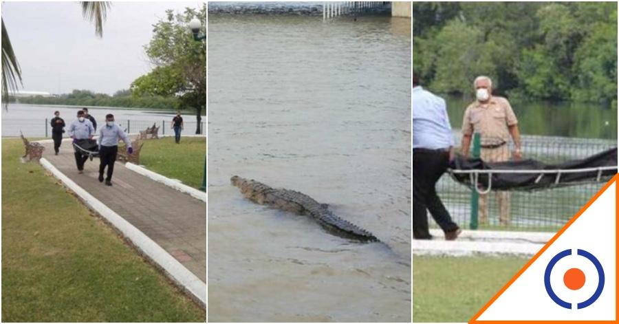 #OMG: Captan en video ataque de cocodrilo en Tamaulipas