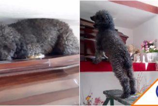 #Viral: Perrito estremeció las redes… Acompañó a su dueña hasta el último minuto