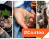 #Conteo: 7 puntos para entender la despenalización de la marihuana en uso lúdico