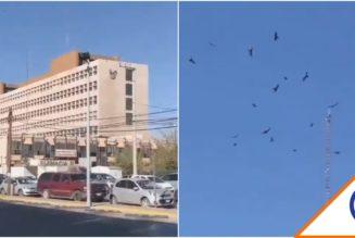 #Viral: Captan a zopilotes volando sobre hospitales del IMSS… huelen la muerte