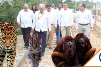 #WTF: El trazado del Tren Maya va, Semarnat autoriza talar 800 hectáreas de selva