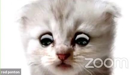 ¡No soy un gato señor juez! Abogado tenía activado un filtro durante un juicio y el video se hace viral